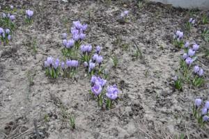 Цветы в парке Садовники