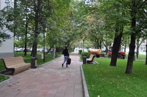 Деревья в Даниловском районе