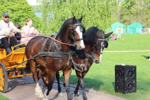 Лошади в музее-заповеднике Коломенское