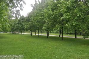 В Даниловском районе содержатся около 44 тысяч деревьев