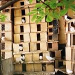 Двор с мини-зоопарком