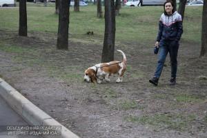 Житель ЮАО гуляет с собакой