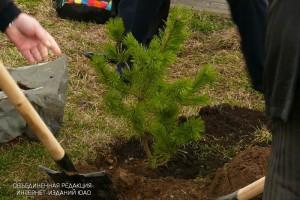 Высадка деревьев в ЮАО