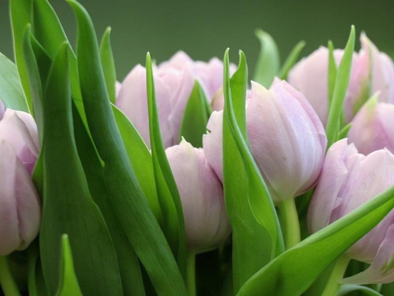 Поздравления 8 марта праздник