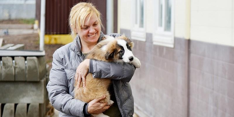 приют волонтер бездомные животные собака мос ру
