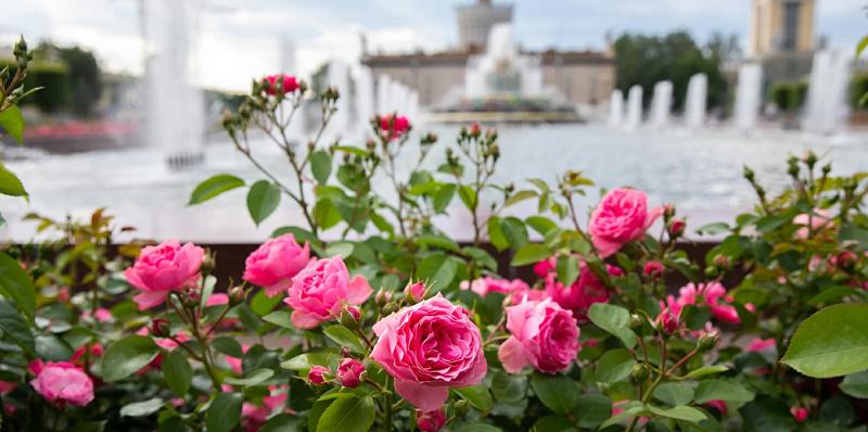 парк цветы мос ру