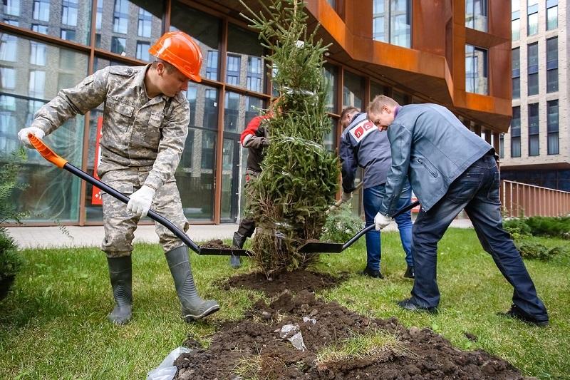 зиларт-высадка-деревьев-озеленение-вк-зиларта
